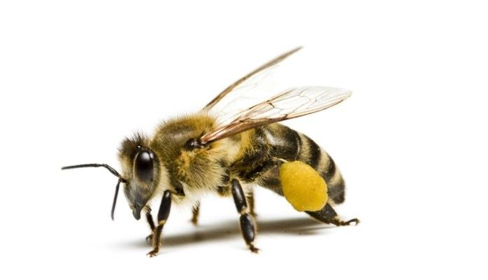 Leadership lessons from bees