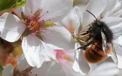 Decline in bees puts supply of raw materials for global business at risk, says report